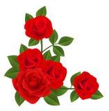 Rosas rojas. Ilustración del vector. ilustración del vector