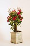 Rosas rojas miniatura en un crisol   Imagen de archivo