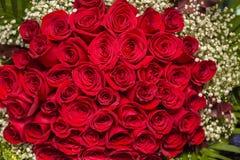 Rosas rojas naturales Fotos de archivo