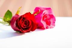 Rosas rojas para el día del ` s de la tarjeta del día de San Valentín aisladas en el fondo blanco Fondo del blanco de la tarjeta  Fotos de archivo