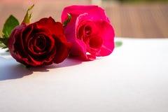 Rosas rojas para el día del ` s de la tarjeta del día de San Valentín aisladas en el fondo blanco Fondo del blanco de la tarjeta  Imágenes de archivo libres de regalías