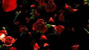 Rosas rojas que caen en fondo negro
