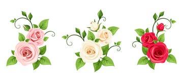 Rosas Rojas Rosadas Y Blancas Sistema Del Vector De Tres Ramas De