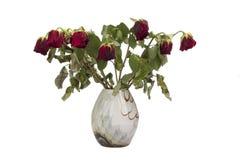 Rosas rojas viejas en el florero aislado en blanco Fotografía de archivo