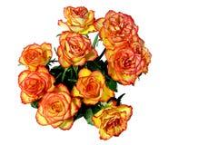 Rosas rojas y anaranjadas Fotos de archivo