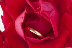 Rosas rojas y anillos de bodas Foto de archivo libre de regalías