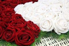 Rosas rojas y blancas Imagenes de archivo