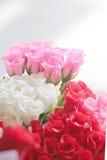 Rosas rojas y blancas. Fotos de archivo