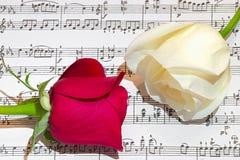 Rosas rojas y blancas Fotos de archivo libres de regalías