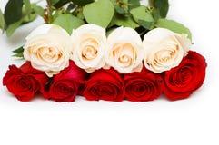 Rosas rojas y blancas aisladas Imágenes de archivo libres de regalías