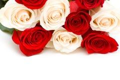 Rosas rojas y blancas aisladas Fotos de archivo libres de regalías