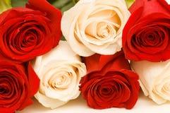 Rosas rojas y blancas aisladas Imagenes de archivo