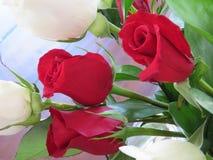 Rosas rojas y blancas en un ramo precioso Imagen de archivo