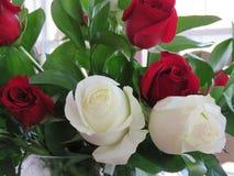 Rosas rojas y blancas en un ramo precioso Imagen de archivo libre de regalías