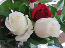 Rosas rojas y blancas en un ramo precioso Imagenes de archivo