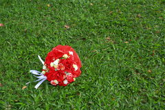 Rosas rojas y blancas que mienten en hierba Foto de archivo
