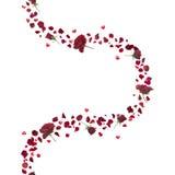 Rosas rojas y curva de los corazones ilustración del vector