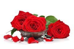 Rosas rojas y pétalos Fotos de archivo