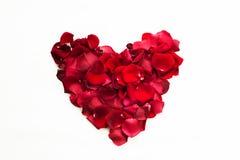 Rosas rojas y pétalos color de rosa aislados en blanco Imagenes de archivo