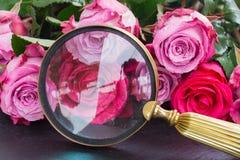 Rosas rojas y rosadas en la tabla Imagen de archivo libre de regalías
