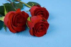 Rosas rojo oscuro con gotas Imagenes de archivo