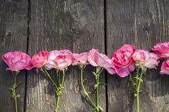 Rosas românticas cor-de-rosa no fundo de madeira rústico fotografia de stock