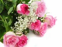 Rosas rosadas Foto de archivo libre de regalías