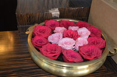 Rosas rosadas Imagenes de archivo