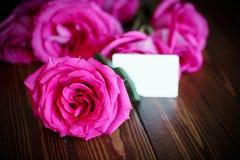 Rosas rosadas brillantes hermosas Foto de archivo libre de regalías