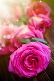Rosas rosadas brillantes hermosas Fotos de archivo