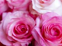 Rosas rosadas como fondo foto de archivo