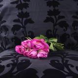 Rosas rosadas de ayer dejadas en un asiento negro del terciopelo Imágenes de archivo libres de regalías