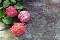 Rosas rosadas en el fondo de madera Foto de archivo libre de regalías