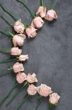 Rosas rosadas en fondo gris Imagenes de archivo