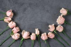 Rosas rosadas en fondo gris Fotografía de archivo libre de regalías