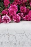 Rosas rosadas en fondo gris Foco selectivo, imagen entonada, efecto de la película Fotos de archivo