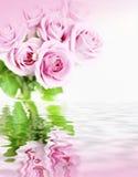 Rosas rosadas en la inundación Imágenes de archivo libres de regalías