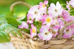 Rosas rosadas en una cesta de la primavera Imagen de archivo