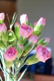 Rosas rosadas en una tabla en un restaurante Imagen de archivo
