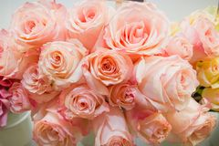 Rosas rosadas Es muchas rosas rosadas Fotografía de archivo libre de regalías
