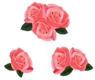 Rosas rosadas hermosas con las hojas. Fotos de archivo libres de regalías