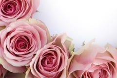 Rosas rosadas hermosas con una carta blanca Fotografía de archivo libre de regalías