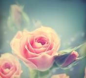 Rosas rosadas hermosas La vendimia labró la tarjeta Imagen de archivo