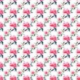 Rosas rosadas polvorientas rojas botánicas herbarias florales de la primavera linda preciosa maravillosa sofisticada apacible bla stock de ilustración