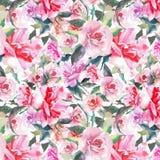 Rosas rosadas polvorientas rojas botánicas herbarias florales de la primavera linda preciosa maravillosa sofisticada apacible bla Fotografía de archivo