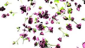Rosas rosadas que caen en el fondo blanco ilustración del vector