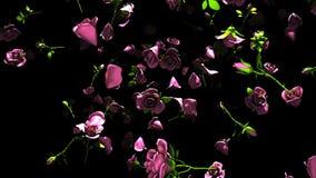 Rosas rosadas que caen en fondo negro ilustración del vector