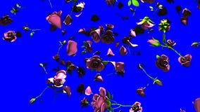 Rosas rosadas que caen en llave azul de la croma stock de ilustración