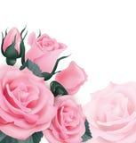Rosas rosadas Tarjeta de felicitación hermosa con un ramo de rosas en la plantilla blanca para la tarjeta de la invitación, cumpl Imagenes de archivo