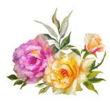 Rosas rosadas y amarillas de Vinage Imagen de archivo libre de regalías